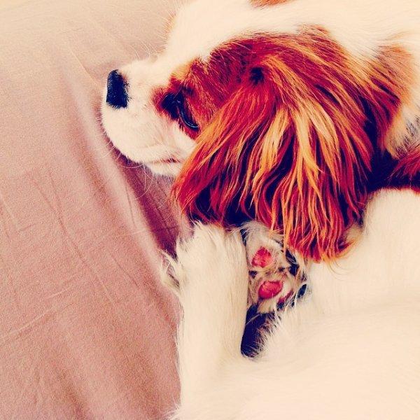 Mon chiot Winnie ! :D