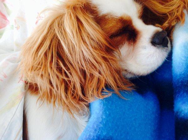 Quelques photos de Winnie ❤️