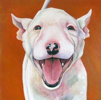 Voici quelques portrait de bull ,magnifique !!!