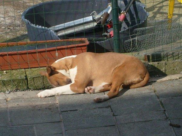 pas facile la vie de chiens !!! lol !