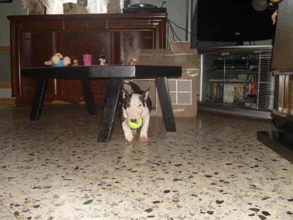hidalgo qui joue avec sa balle !