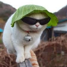 il pleut j'ai mis mon petit chapeaux