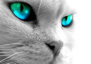 le chat avec le plus beaux yeux au monde.
