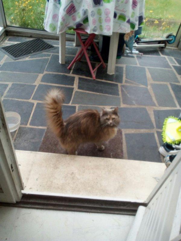 Mon bb chat a moi que j'adore