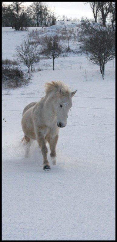 neige !!