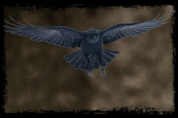 Mon oiseau en cage, c'est comme si c'était un petit corbeau dans une grande cage. //I'm lost. ..