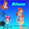 Fiche d'identité: Bloom.