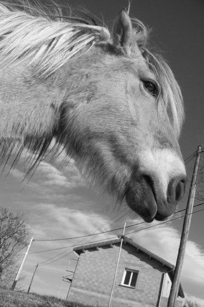 Habile le coup de foudre ,petit poney de mon coeur...