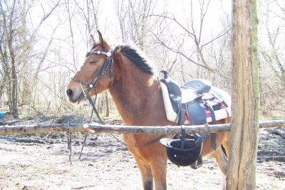 nadjal le meilleurs poney a mes yeux