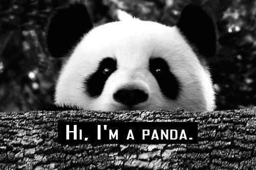 panda *o*