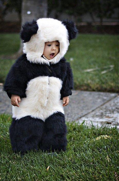 je veut un bebe pandanounet comme lui *o*