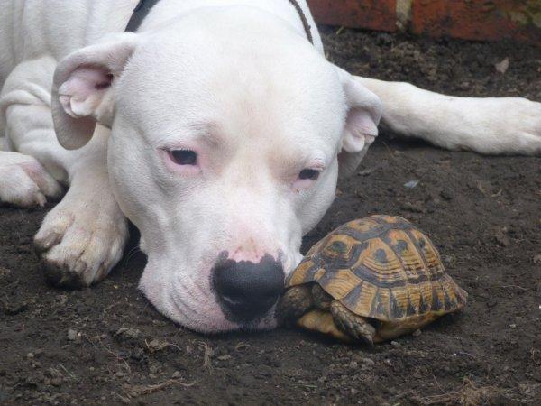 falco et les tortue 1 ans et 6 mois