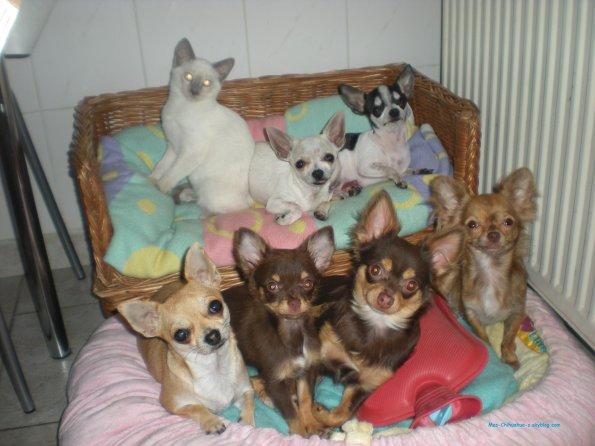 Voici mes animaux tous ensemble!!