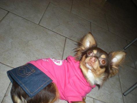 Luna avc nvlle vetement du Marché de noël pour chien a Alost!!