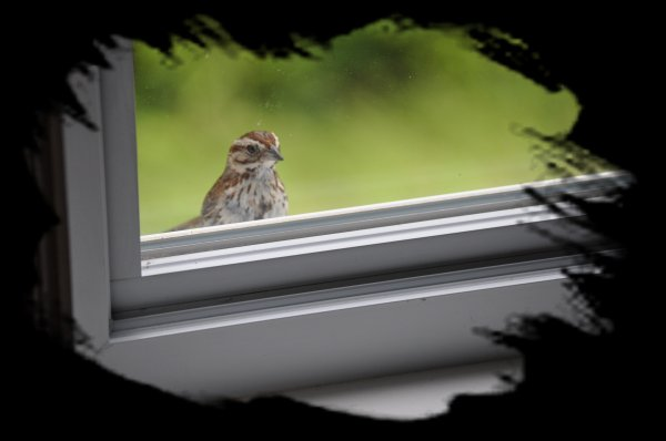 L'oiseau près de ma fenêtre