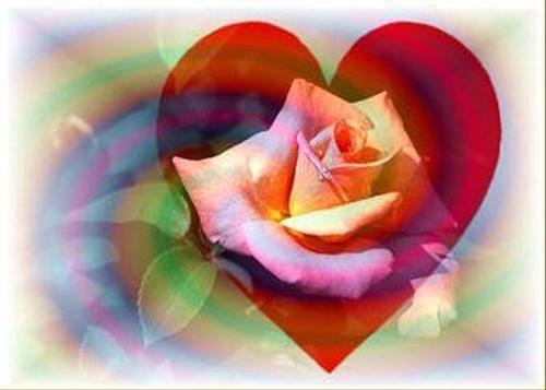 C'est une rose magique... Que j'ai spécialement créé... Pour toi,ma douce Amie , elle sera unique... Car c'est la rose de l'amitié... Mais vous devrez l'offrir à votre tour... Elle à besoin de cette symbiose... Pour donner son amour... Cette rose est un morceau de notre c½ur.. De mur en mur elle ne fera que passer... Elle est faite pour distribuer le bonheur... Et former la plus grande chaîne de l'amitié !!!