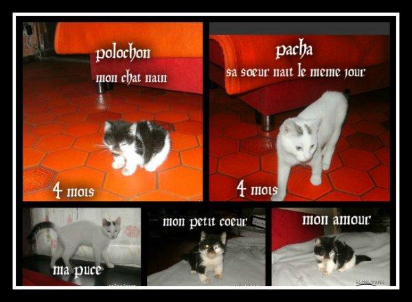 voici un montage de mes chats naient le 15 décembre