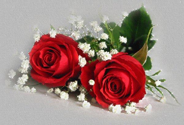 merci mon ami dauphin159112 pour ces jolis kdos