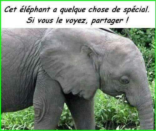 ---------------------------------=o( Cet éléphant a quelque chose de spécial  )o=----------------------------------