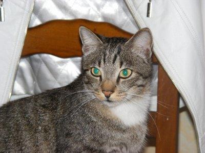 mon chat rénéner