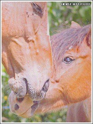 «  Le bien-être des chevaux