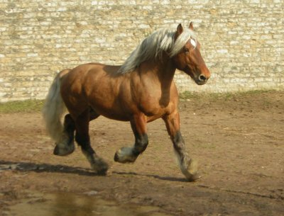 cheval de trait rustique