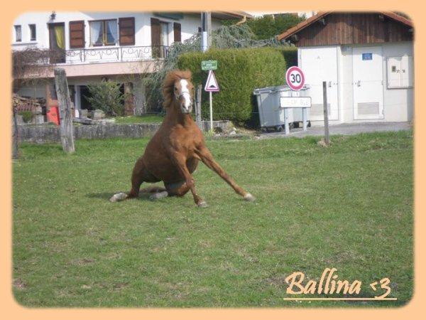 MA BAlLEiNE FAiT SA BElLE AU PRE  ♥ .