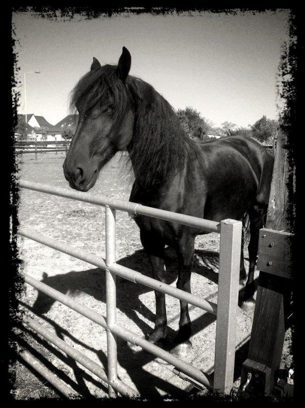 Wyck une des plus belles Jument de mon centre equestre