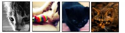 ♠On ne possède pas un chat, on est juste autorisé à entrer dans sa vie. ->>Beryl Reid.