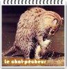 Le chat-pêcheur