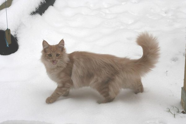 Mes chats dans la neige