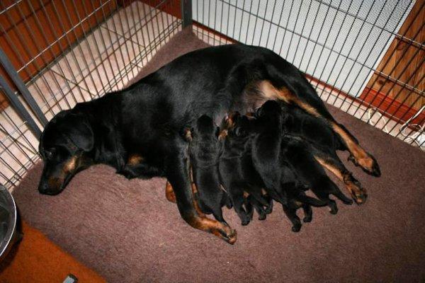 Eïnhoa et ses bébés