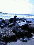 Photo de LEii-A4h