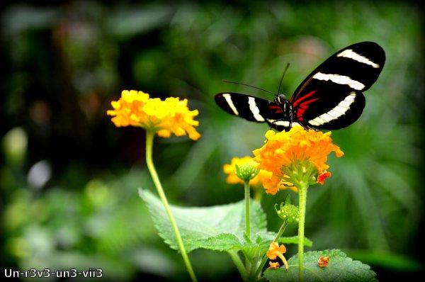 Je suis oune magnifique papillion !
