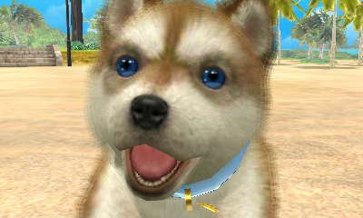 [N+C] Mes chiots dans Nintendogs + cats version Bouledogue