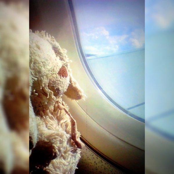 Lapinou rentre de voyage