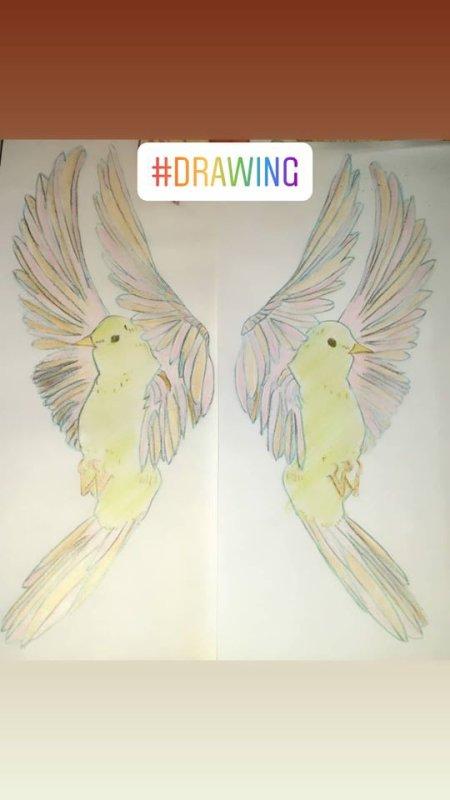 Colibris / Hummingbirds Drawings