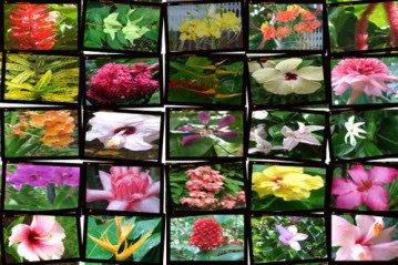 31 - loterie des fleurs