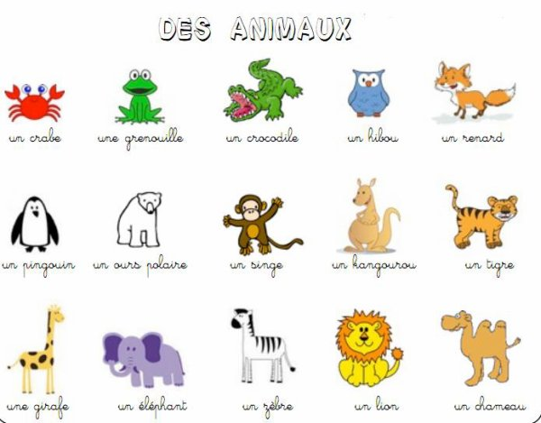 38 - loterie des animaux
