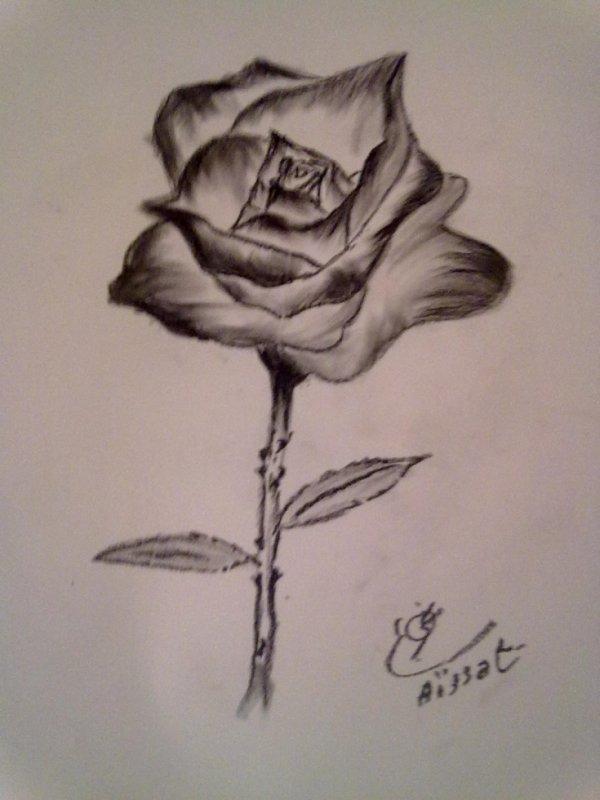 mi Rosa forever
