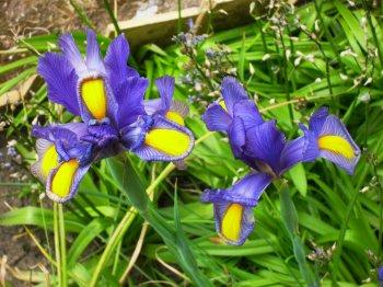 microcosmos (fleurs de chez mamy)