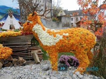 pense-bete pour le jardin: les chrysanthemes