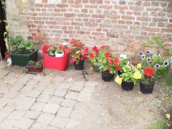 quelques photos du jardin