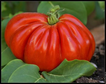 recette soupe aux tomates