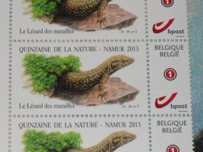 quelques timbres Buzin, trouvé pendant la quinzaine de la nature a namur.