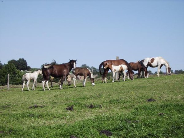 ************************ UN BEL ELEVAGE DE PAINT HORSES !************************