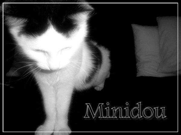 Minidou , mon petit chat