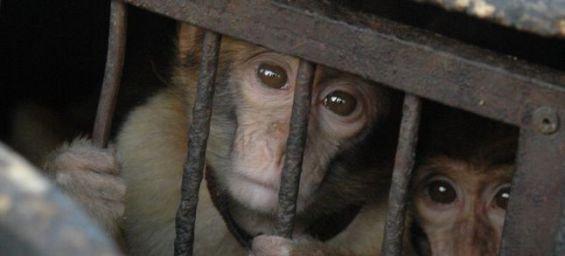 Stop au commerce illégal d'animaux sauvages sur internet