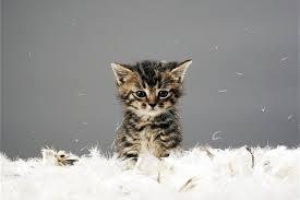 C qui le chaton trop MIGNON ?