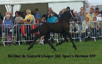 Hérihor Champion des poulains 2010 pour la Wallonie !!!!